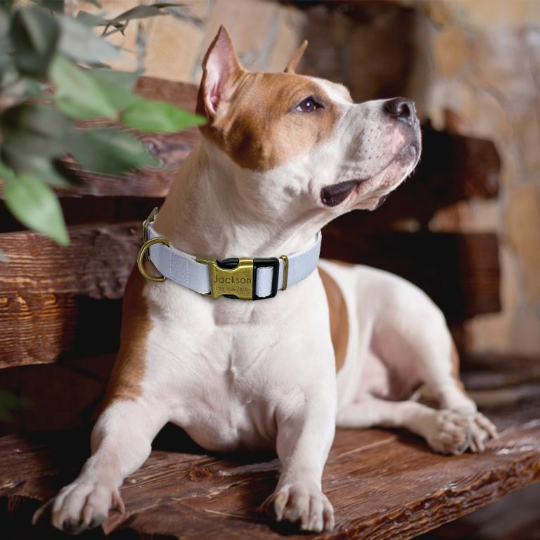 Personalized Nylon Dog Collar Custom Engraved Dog Tag Collar Adjustable Pet Puppy Cat Name ID Collars 4 / Shop Social Online Store